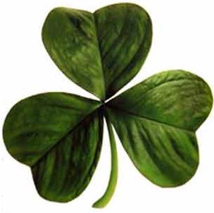 Shamrock clover